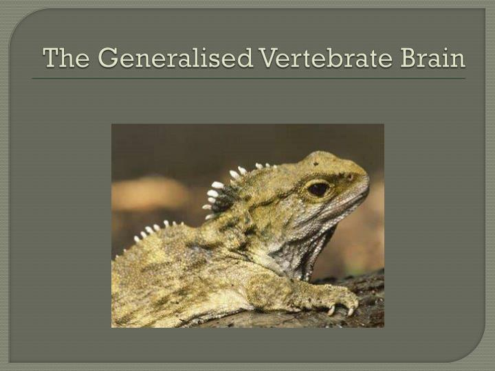 The Generalised Vertebrate Brain