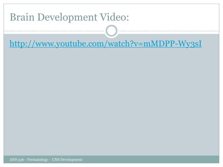 Brain Development Video: