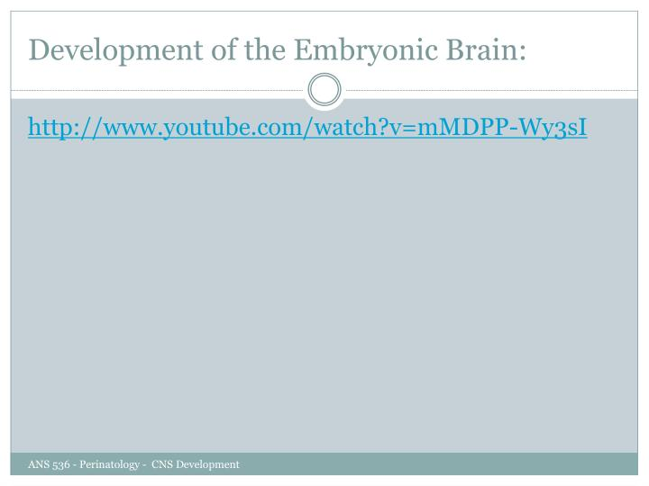 Development of the Embryonic Brain: