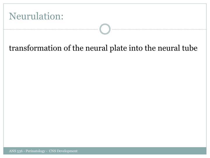 Neurulation: