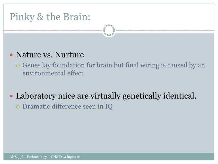 Pinky & the Brain: