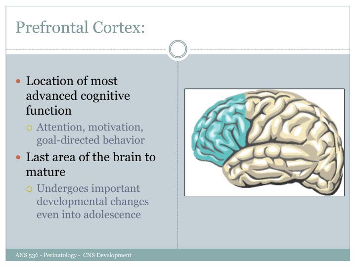 Prefrontal Cortex: