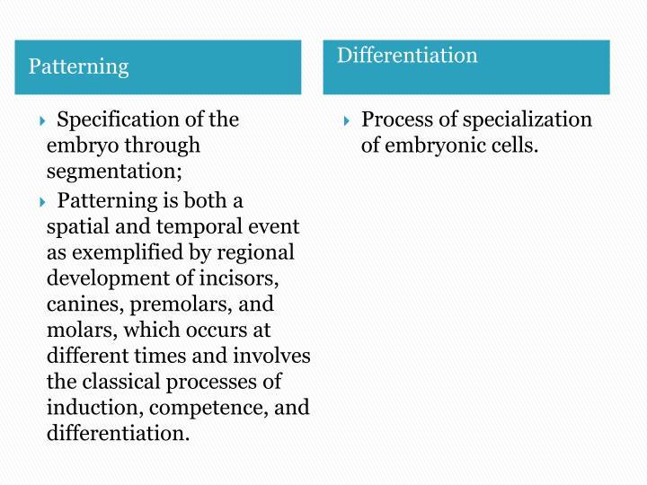 Specification of the embryo through segmentation