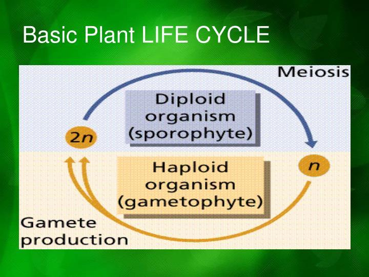 Basic Plant LIFE CYCLE
