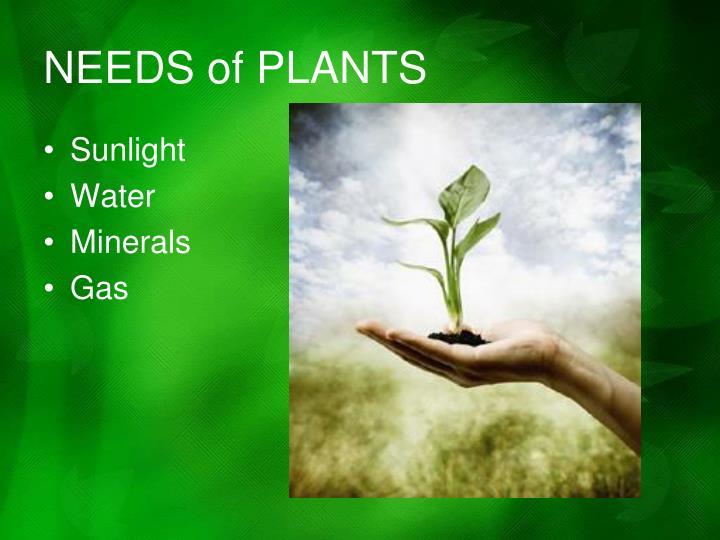 NEEDS of PLANTS