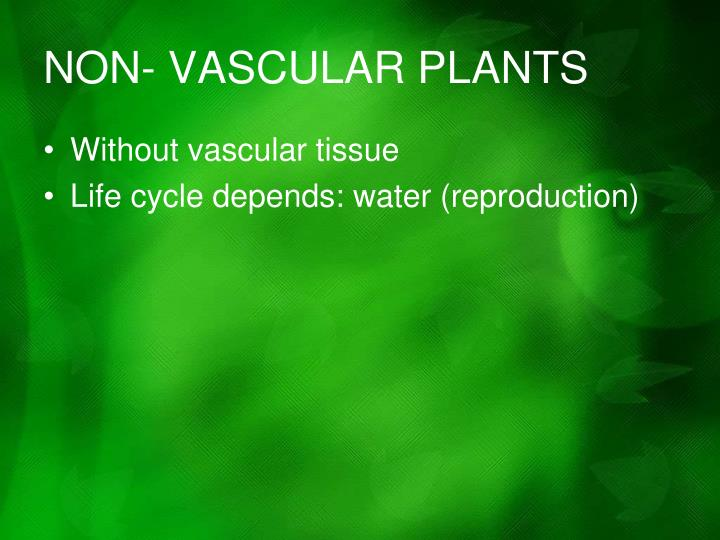 NON- VASCULAR PLANTS