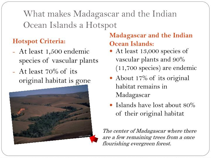 madagascar and the indian-ocean islands biodiversity hotspot essay The biodiversity hotspots hold especially high numbers of endemic species, yet their combined area of remaining habitat covers only 23 percent of the earth's land surface each hotspot faces extreme threats and has already lost at least 70 percent of its original natural vegetation.