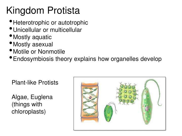 Kingdom Protista Heterotrophic Or Autotrophic Unicellular Or Multicellular
