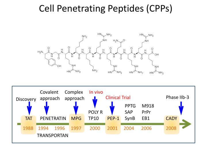 Cell Penetrating Peptides (CPPs)