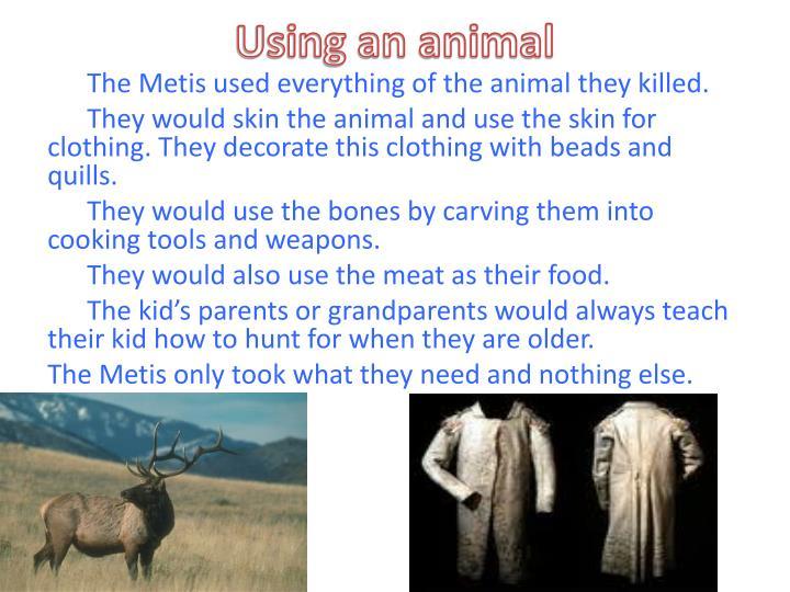 Using an animal