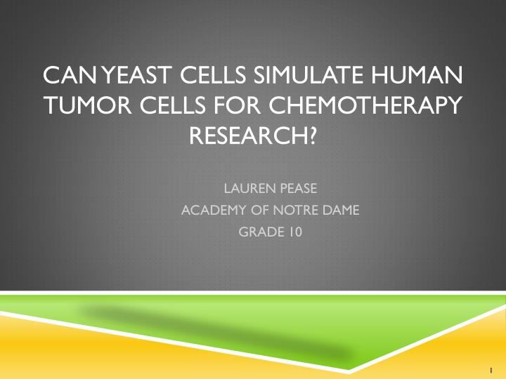 can yeast cells simulate human tumor cells for chemotherapy research n.