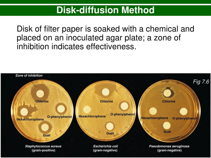 lab 35 evalutation of antiseptics the filter paper disk method The most commonly described method of applying the test body fluid specimen to the filter paper disk (typically 6 mm in diameter) is to use forceps to dip the disk in the fluid and then press the disk to the side of the bottle to drain any excess fluid.