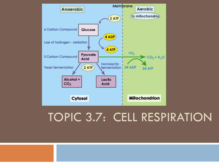 topic 3 7 cell respiration n.