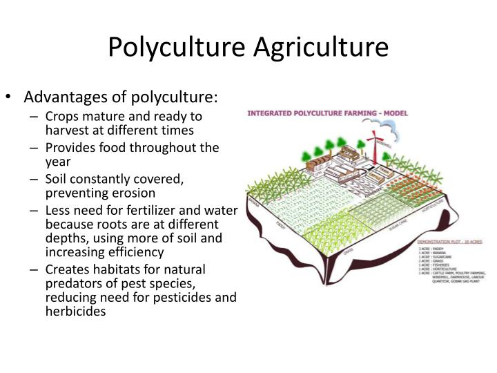 Polyculture Agriculture