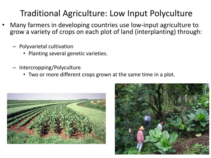 Traditional Agriculture: Low Input Polyculture