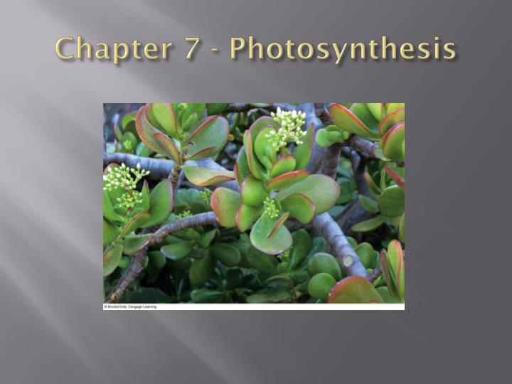 chapter 7 photosynthesis n.