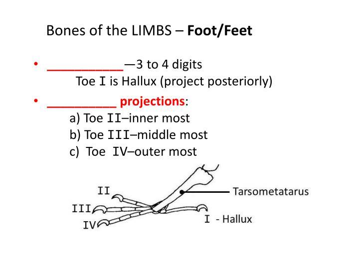 Bones of the LIMBS –