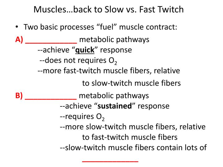 Muscles…back to Slow vs. Fast Twitch