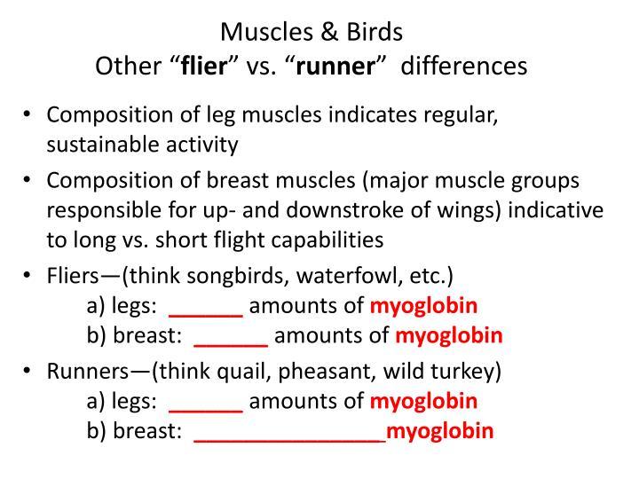Muscles & Birds