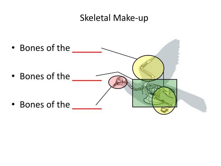Skeletal make up