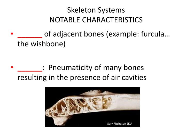 Skeleton systems notable characteristics