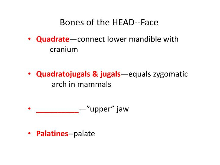 Bones of the HEAD--Face