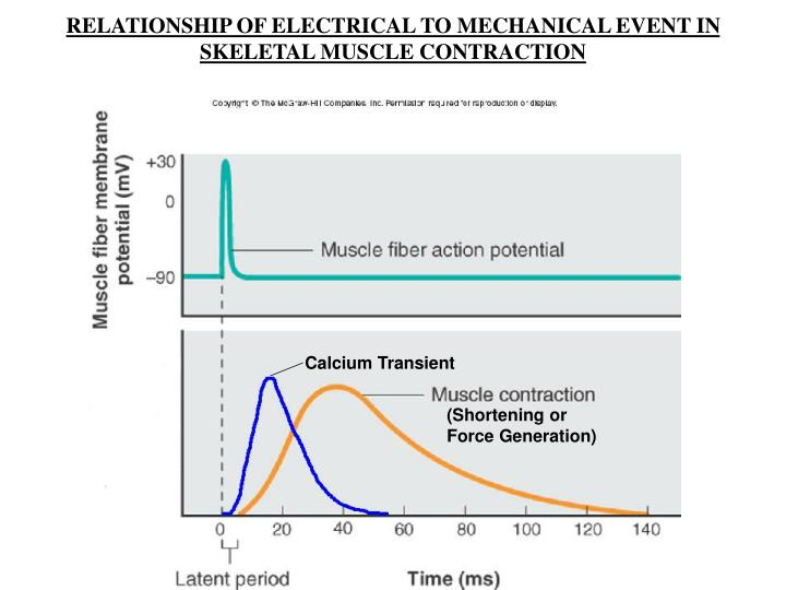 RELATIONSHIP OF ELECTRICAL TO MECHANICAL EVENT IN SKELETAL MUSCLE CONTRACTION