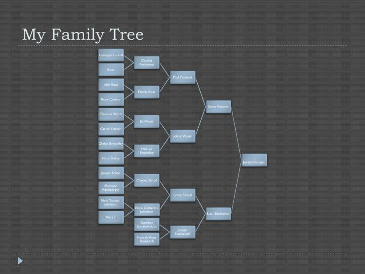 my family tree n.
