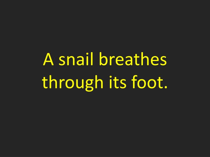 A snail breathes through its foot.