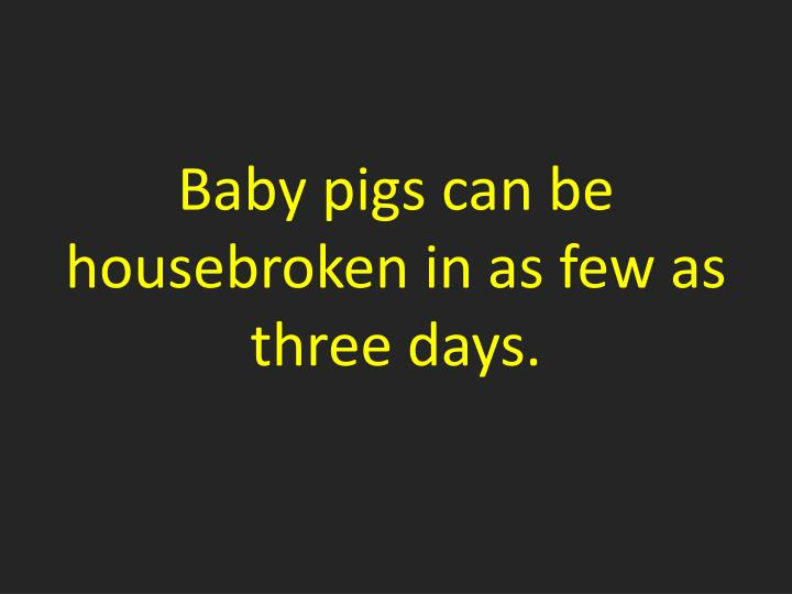 Baby pigs can be housebroken in as few as three days.