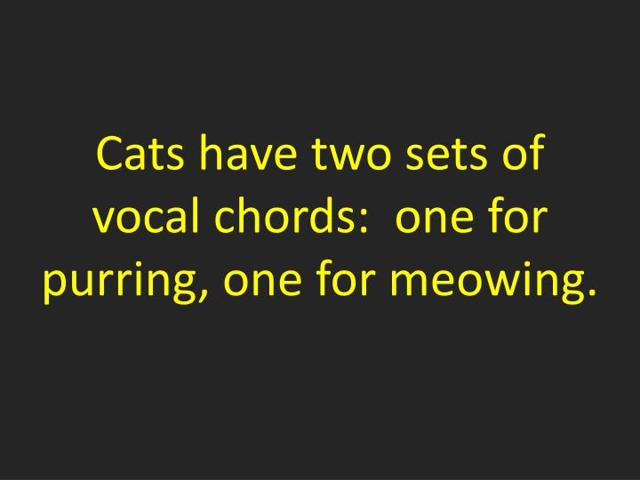 Cats have two sets of vocal chords:  one for purring, one for meowing.