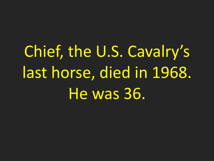 Chief, the U.S. Cavalry's last horse, died in 1968.  He was 36.