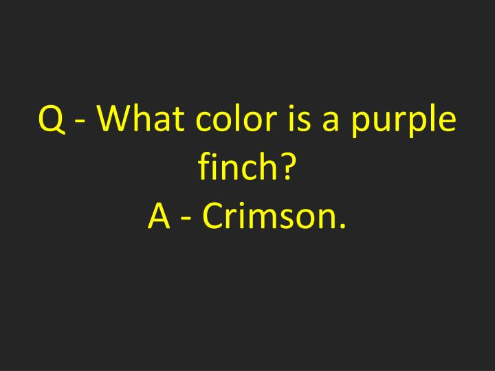 Q - What color is a purple finch?