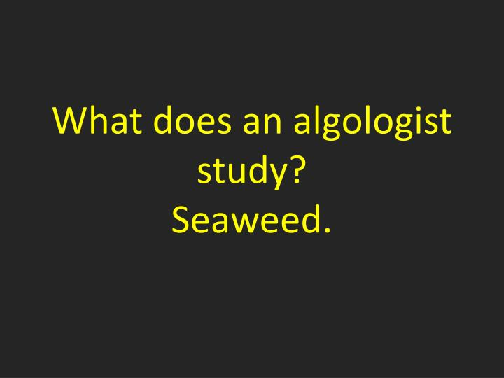 What does an algologist study?