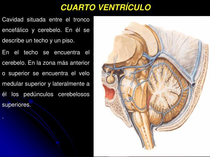 PPT - MENINGES LIQUIDO CEFALORRAQUÍDEO PowerPoint Presentation - ID ...