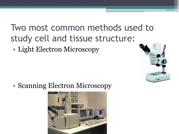 Two most common methods used to study cell and tissue structure:
