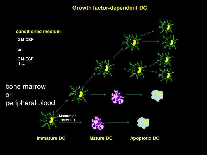 Growth factor-dependent DC
