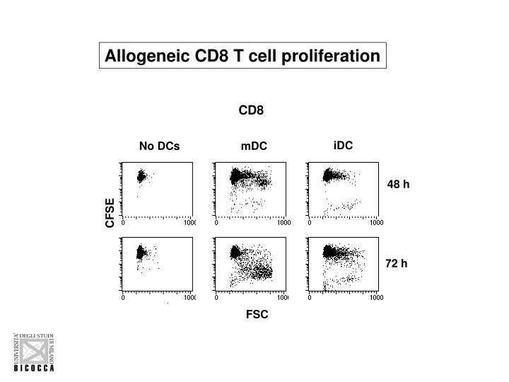 Allogeneic CD8 T cell proliferation