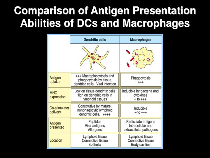 Comparison of Antigen Presentation