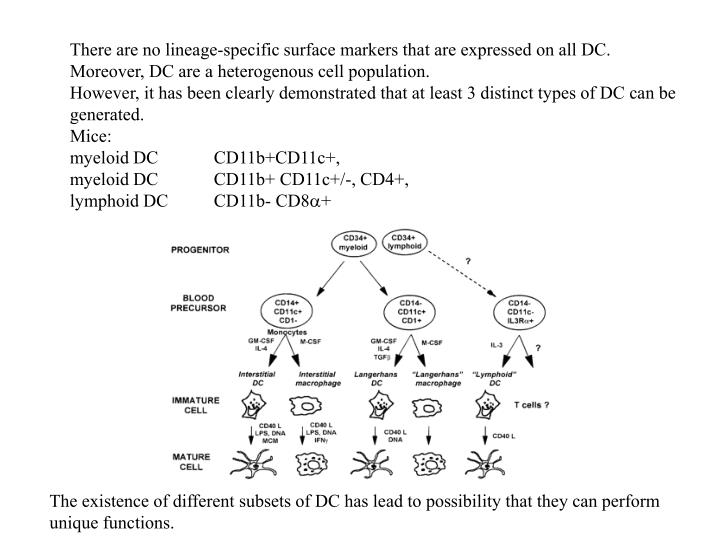 There are no lineage-specific surface markers that are expressed on all DC.