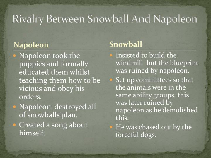 Rivalry Between Snowball And Napoleon