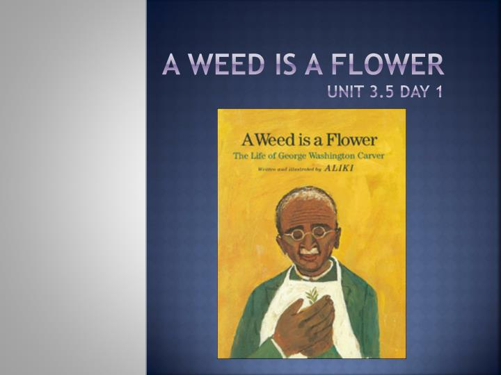 a weed is a flower unit 3 5 day 1 n.