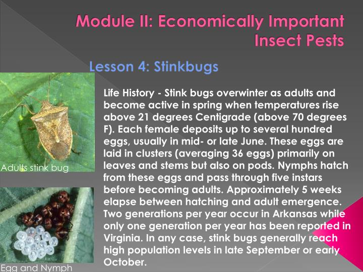 module ii economically important insect pests n.