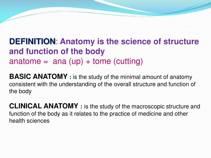 Ppt Anatomical Terms Powerpoint Presentation Id2032605