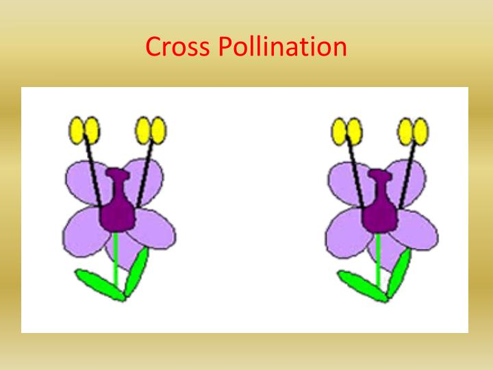 Cross Pollination