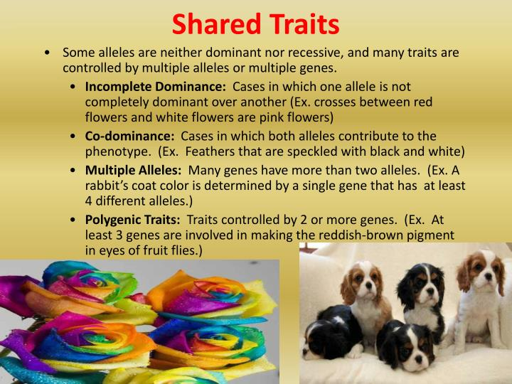 Shared Traits