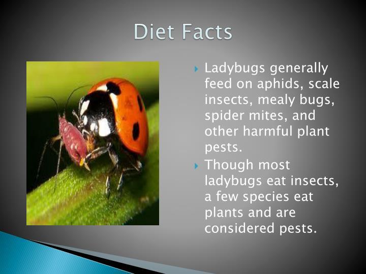 Diet Facts