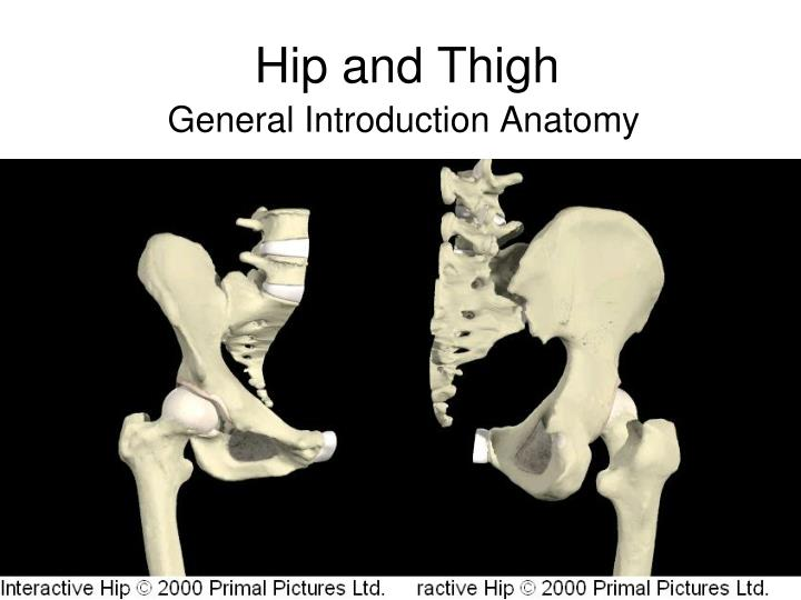 hip and thigh n.