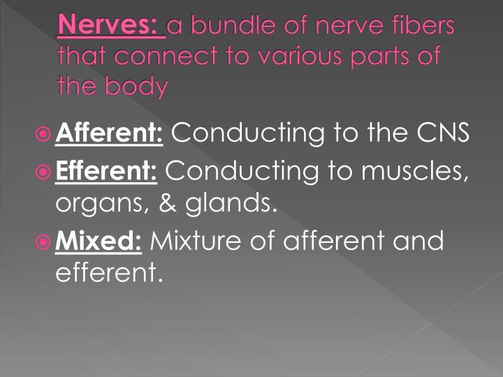 Nerves: