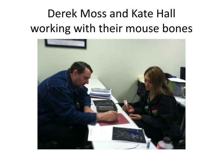 Derek moss and kate hall working with their mouse bones